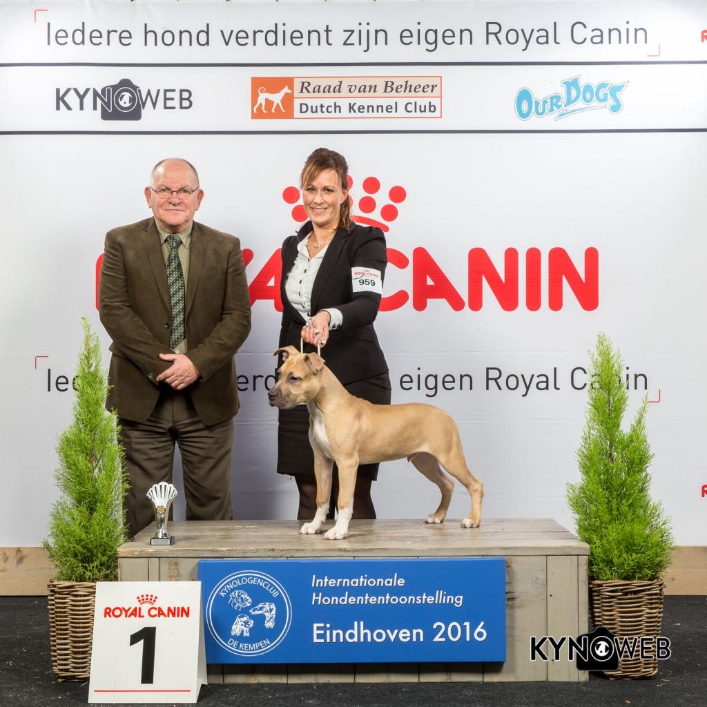B_1_Zaterdag_Eindhoven_2016_Kynoweb- Ernst von Scheven_January 23, 2016_15_11_31