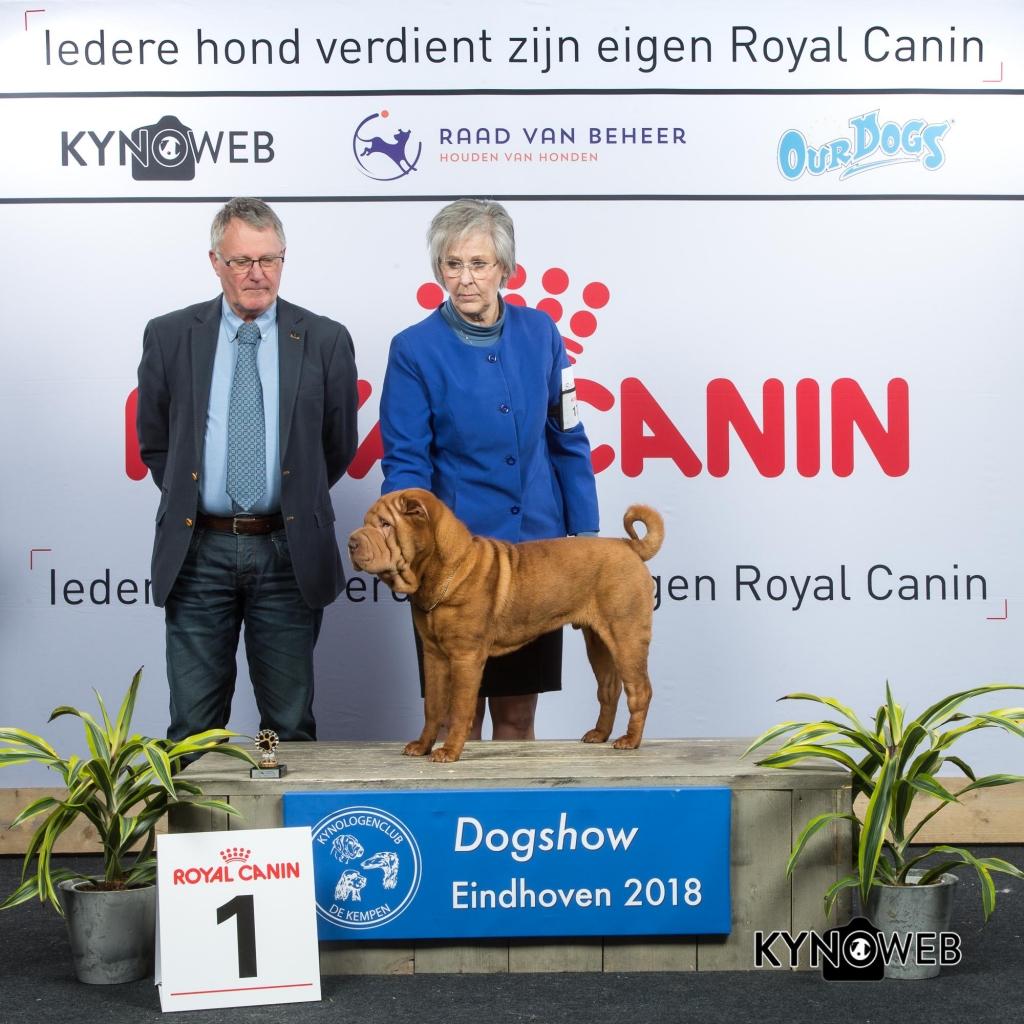 P_1_EINDHOVEN_2018_Kynoweb__20180204_16_03_12